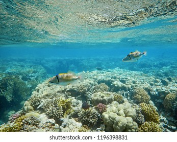 coral reef with stony coral and exotic fishes in tropical sea