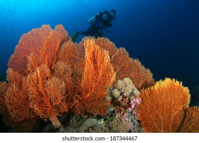 Coral Reef in Thailand