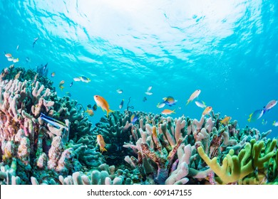 Coral reef and toropical fishes