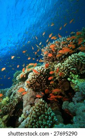 Coral Reef in Tropical Blue water