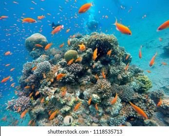 Coral reef and tropical fish in the Red Sea next to Eilat