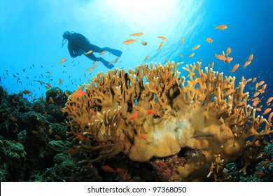 Coral Reef, Tropical Fish and Scuba Divers in the Red Sea
