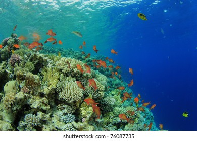 Coral Reef and Tropical Fish in the Sea
