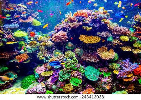coral reef tropical fish sunlight singapore の写真素材 今すぐ編集