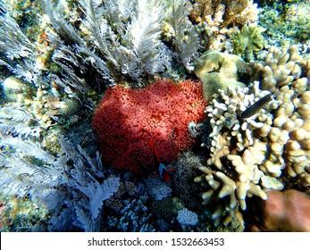 Coral reef and tropical fish underwater at Balicasag Island Cliff near Panglao, Bohol, Phillipines