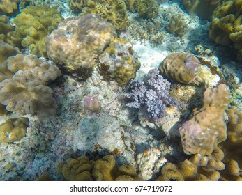 Coral reef in tropical sea. Colorful underwater scene with marine animal. Tropical seashore underwater photo. Snorkeling in coral reef. Exotic island vacation adventure. Sea bottom with coral top view
