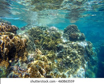real underwater world. Exellent World Coral Reef Of Tropical Sea During Low Tide Colorful Coral Close To Water  Surface With Real Underwater World T