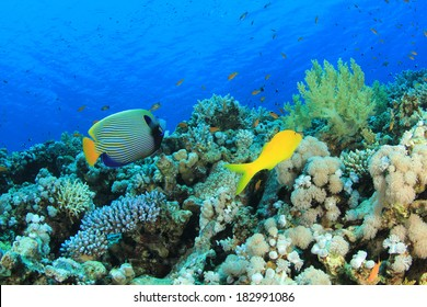 Coral Reef Underwater with Emperor Angelfish