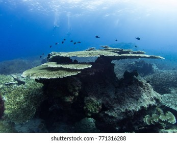coral reef underwater with fishs