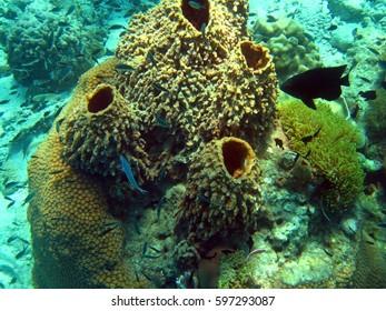 coral reef underwater life