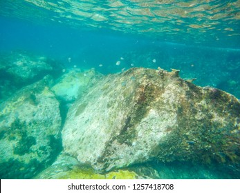 Coral reef Underwater life Caribbean sea Martinique island