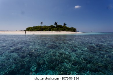 Coral reefs surrounding small tropical island with three palms in Pacific