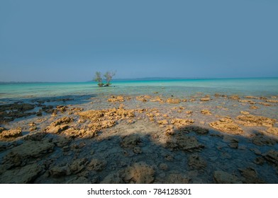 coral rocks in foreground with blue water in background at elephant beach, Havelock Island, Andaman and Nicobar, India