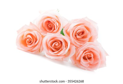 Coral rose on white background