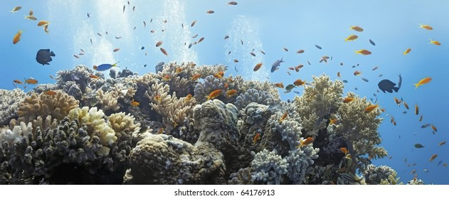 Coral scene - panorama
