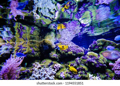 Coral and sea fish
