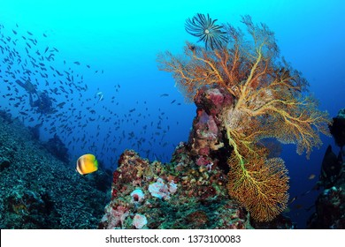coral in sipadan malaysia