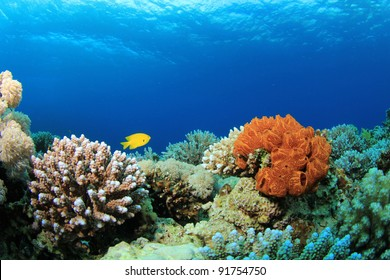 Coral and Sponges in the Sea