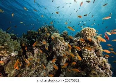coral, sun ocean and fish