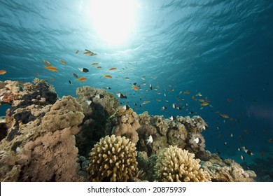 coral, sun ocean and fish