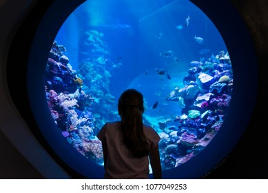 At Coral World Underwater Observatory in Eilat, Israel