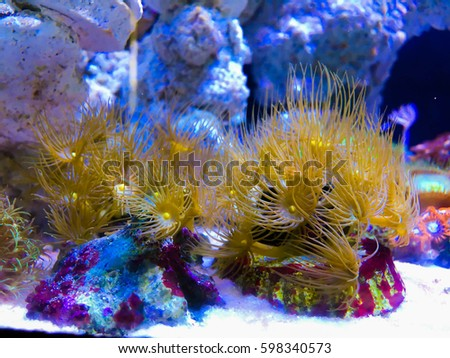 corals aquarium light black light stock photo edit now 598340573