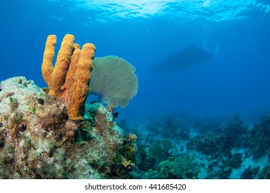 Coral's in Cayman with Diver in Background