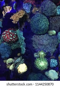 """Glow in the dark"" Corals expressing bioluminescence."