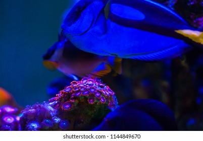 corals of marine aquarium