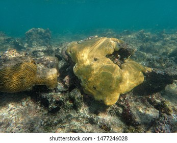 Corals are marine invertebrates within the class Anthozoa of the phylum Cnidaria. They typically live in compact colonies of many identical individual polyps.