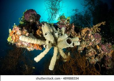Corals on sunken WW2 ship