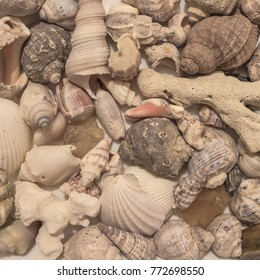 Corals and shells of various sizes, seafood. White and gray tones. View from above.