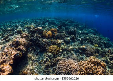 Corals and tropical fish in underwater blue ocean