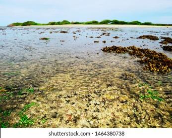 Coralscape and Kurusadai Island, Gulf of Mannar Biosphere Reserve, Tamil Nadu, India.