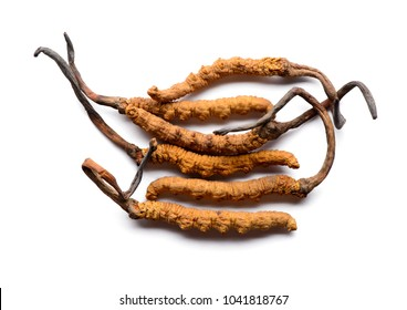 Cordycep sinensis herbs (Chong cao) Viagra. Isolated on white background.