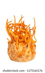 Cordyceps militaris  isolated on white background.Healthier choice  concept.