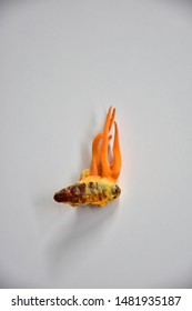 Cordyceps militaris tang chao growing on Bombyx mori, mulberry silkworm pupa with white background
