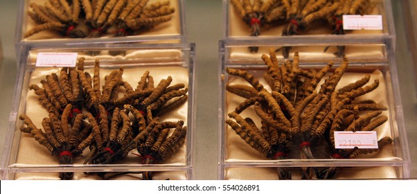 Cordyceps (Ophiocordyceps sinensis) - famous ingredient of traditional medicine in China