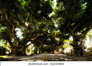 Corel Gables, Miami - Florida