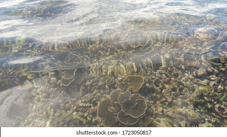 Corel reef under the sea in the Pigeon Island Trincomalee