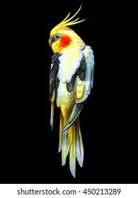 Corella parrot drawing black background