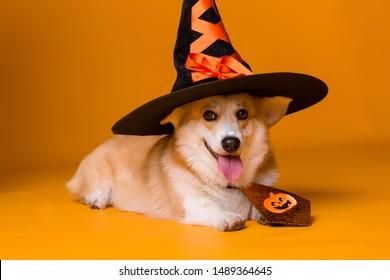 Halloween Puppy Images Stock Photos Vectors Shutterstock
