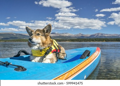 Corgi dog in a life jacket on a stand up paddling board ready for paddling on Turquoise Lake in Colorado