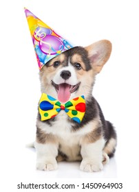 Corgi puppy in birthday hat and tie bow. isolated on white background