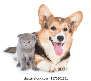 corgi puppy with open mouth lying with tiny kitten. Isolated on white background