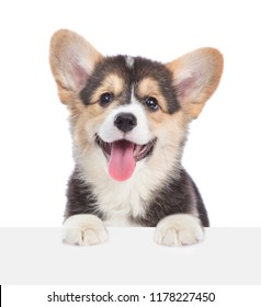 Corgi puppy over empty white board. isolated on white background. Space for text