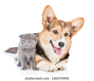 Corgi puppy and tiny kitten looking at camera together. Isolated on white background