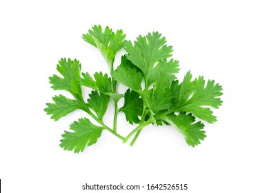 Coriander leaf isolated on white background , top view , flat lay.