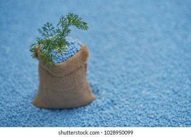 Coriander leaves in gunny sack on blur fertilizer background.