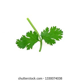 coriander leaves isolate on white background
